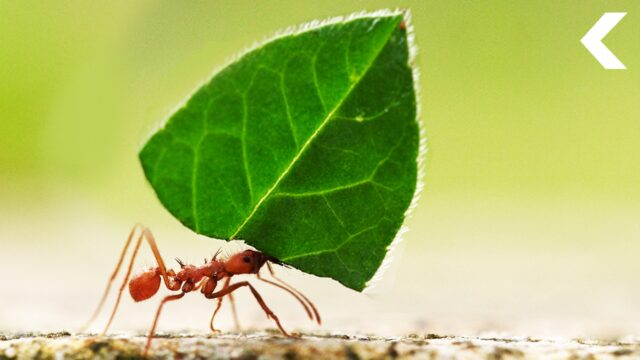 how to keep ants out of dog food